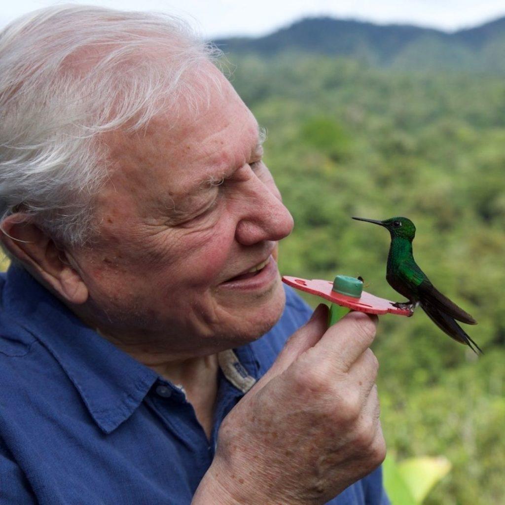 La vida a color con David Attenborough, la docuserie de Netflix para deleitarte la pupila.