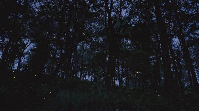 """Millones de luciérnagas, millones de pixeles"" lg oled"